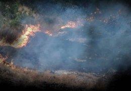 600 Hektar Waldfläche abgebrannt