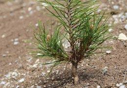 Kampagne: Ein Baum für Şengal