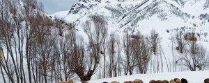 Kürdistan dağlarına vefa borcu
