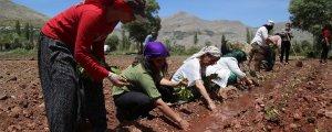 HDP'li kadınlar Semsûr'da