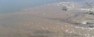 Dicle'de balık türleri yok oldu