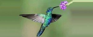 Kuşlarla ilgili yerel efsaneler neden önemlidir?