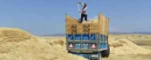 Samanın fiyatı 1.250 TL'ye çıktı