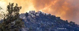 Cezayir ve Tunus'ta orman yangınları