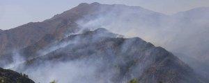 Dört kentte ormanlar yanıyor