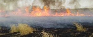 Tarım arazilerini de yakıyor