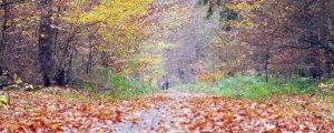 Payîzxêra helbesta Kurdî