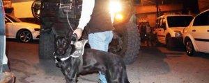 Amed'de köpekli baskın
