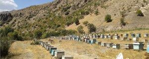 Yasaklar arıları öldürüyor