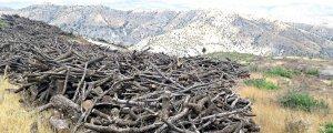 Cudi'de orman katliamı