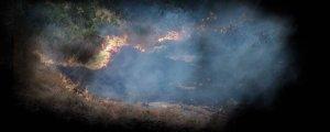 Lice'de ormanlık ateşe verildi