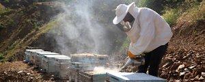 JES'lerden arı katliamı!