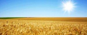Kıtlığa çare: Unutulmuş yiyecekler