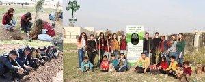 Înîsiyatîfek ji bo heşînkirina Rojava: Keziyên Kesk