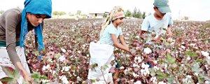 Pamuk tarlalarında kölelik koşulları