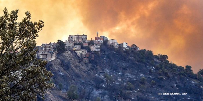 Cezayir'de orman yangınları sürüyor/foto: AFP